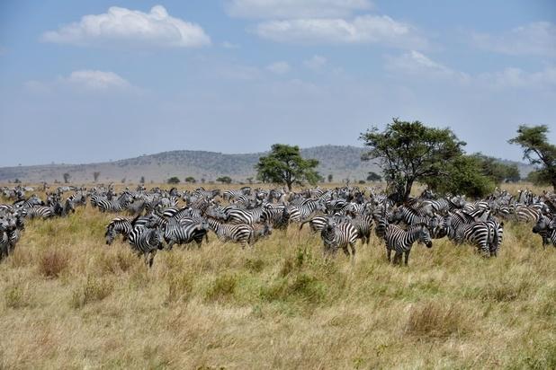 469885bc7cdd42 Bevolkingsgroei rond Serengeti drijft dieren in het nauw - Natuur ...