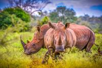 Les animaux de grande taille, premières victimes de l'activité humaine