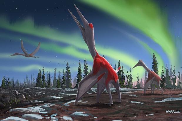 Découverte au Canada du plus gros animal volant de l'histoire