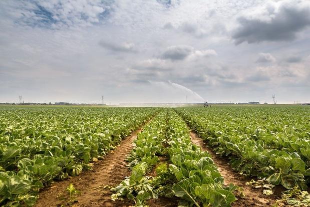 Le Prix Des Terres Agricoles Flambe En Belgique Belgique Levif