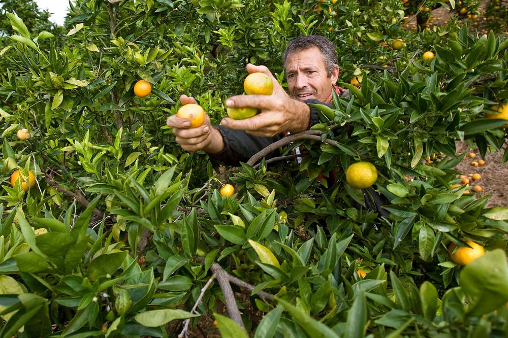 Appelsienenpluk in Spanje, Marcos Garcia Rey