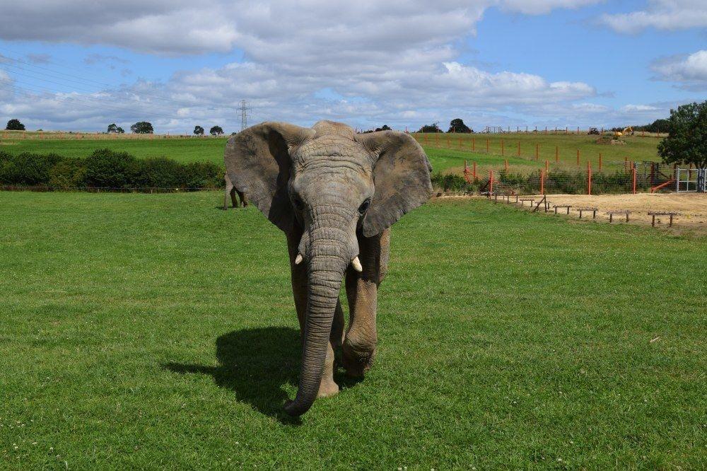 Noah's Ark Zoo Farm, Elephantlady2017