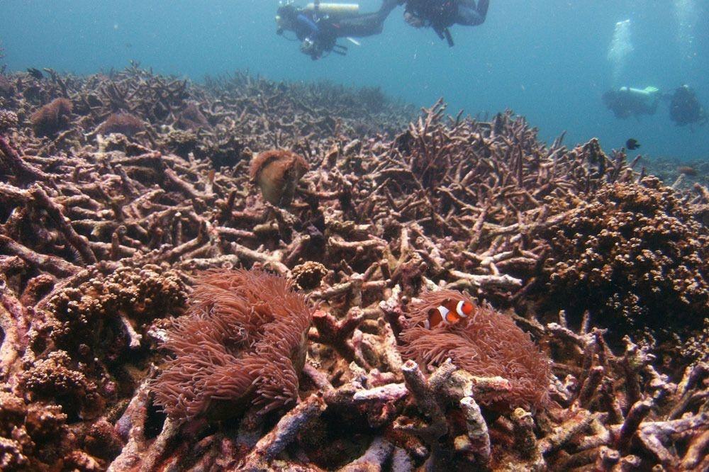 Duikers zwemmen boven een dood koraalrif , Reuters