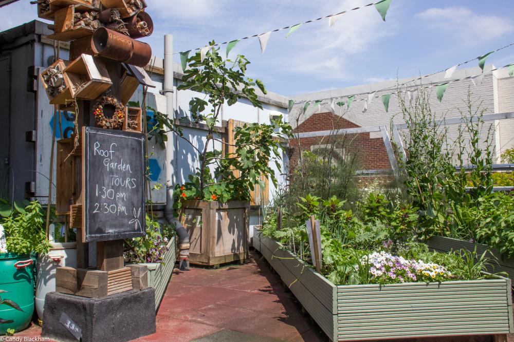 Providence Row Rooftop Garden, Candy Blackman