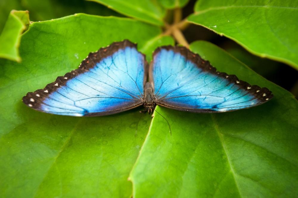 Vlindertuin, Jonas Verhulst