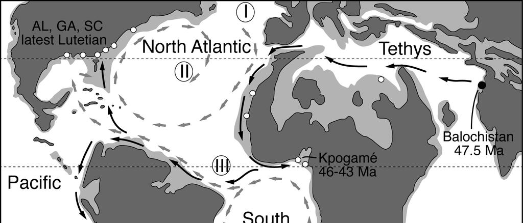 La carte du milieu du Rocene (environ 40 millions d'années) montre les masses continentales (gris foncé), les mers épicontinentales (gris clair) et les localités où se trouvent les protocétides lutétienne et bartonienne (cercles ouverts). Cercle noir pour la zone présumée d'origine du groupe; étoile noire pour la localité de Peregocetus. Les flèches grises indiquent les principaux paléocourants de la surface de l'Atlantique. Les numéros DdDDD font référence aux différentes voies de dispersion vers le Nouveau Monde par les protocétides. Les flèches noires illustrent l'hypothèse privilégiée, via l'Atlantique Sud., Lambert