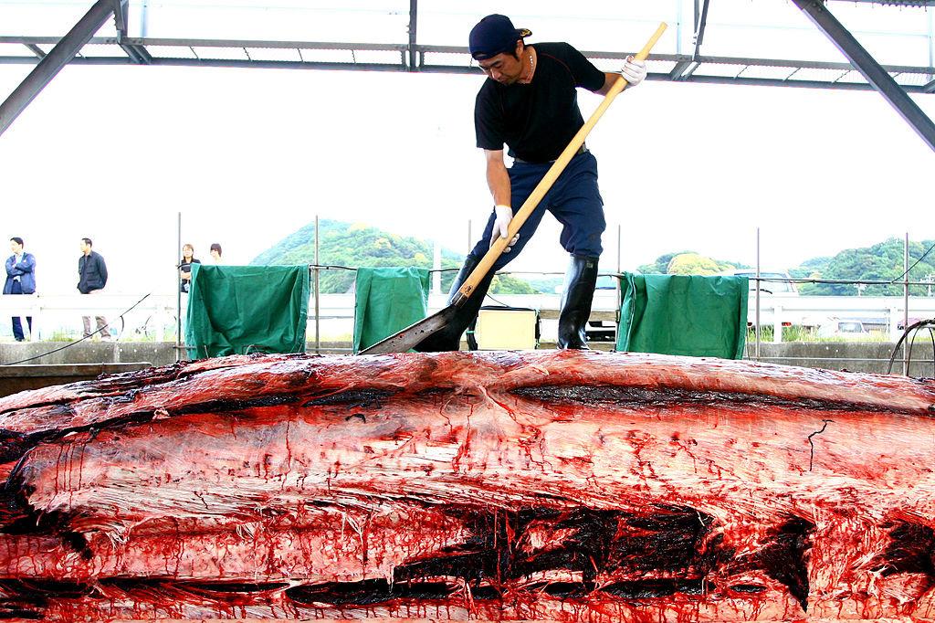 Een Japanse visser slacht een spitssnuitdolfijn., Getty