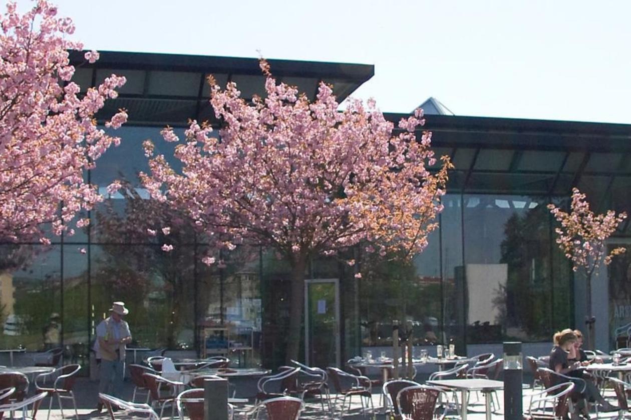 Voor de ingang van het oude Munch Museet werden 5 Japanse kerselaars geplant bij wijze van dank voor de Japanse sponsor., WS
