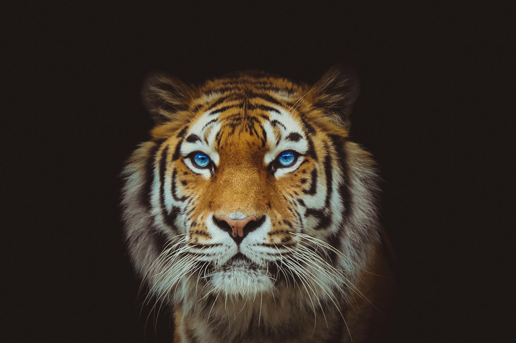 Eye of the Tiger, Getty