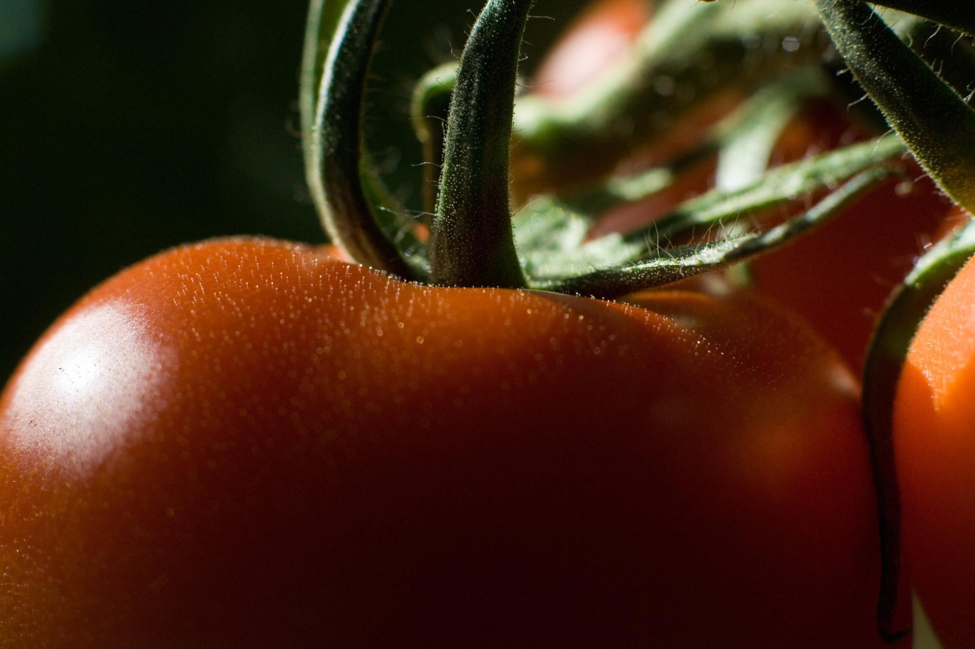 'Tomatenconcentraat is het toegankelijkste industriële product van het kapitalisme.', Getty