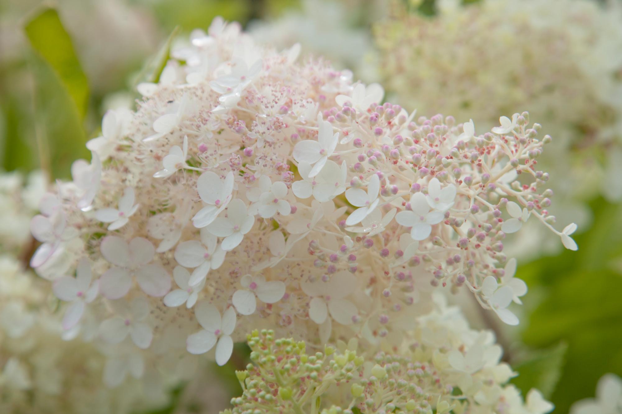 Kleurrijke bloemen, Getty