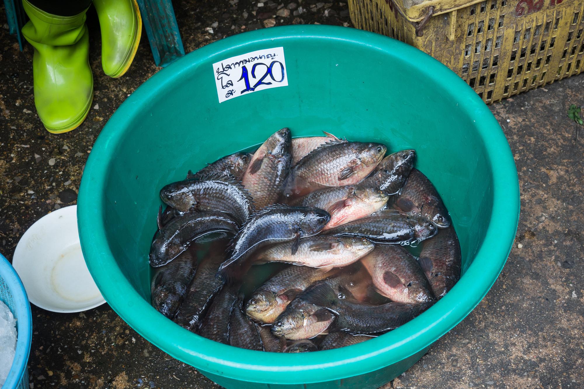 Verse vis te koop op de Mahachai Fish Market, Getty