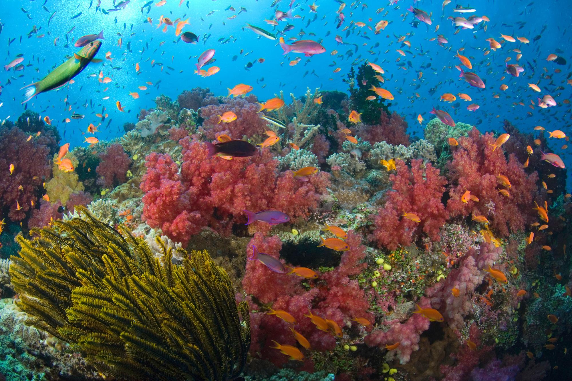 Vanua Levu, Fiji., Getty