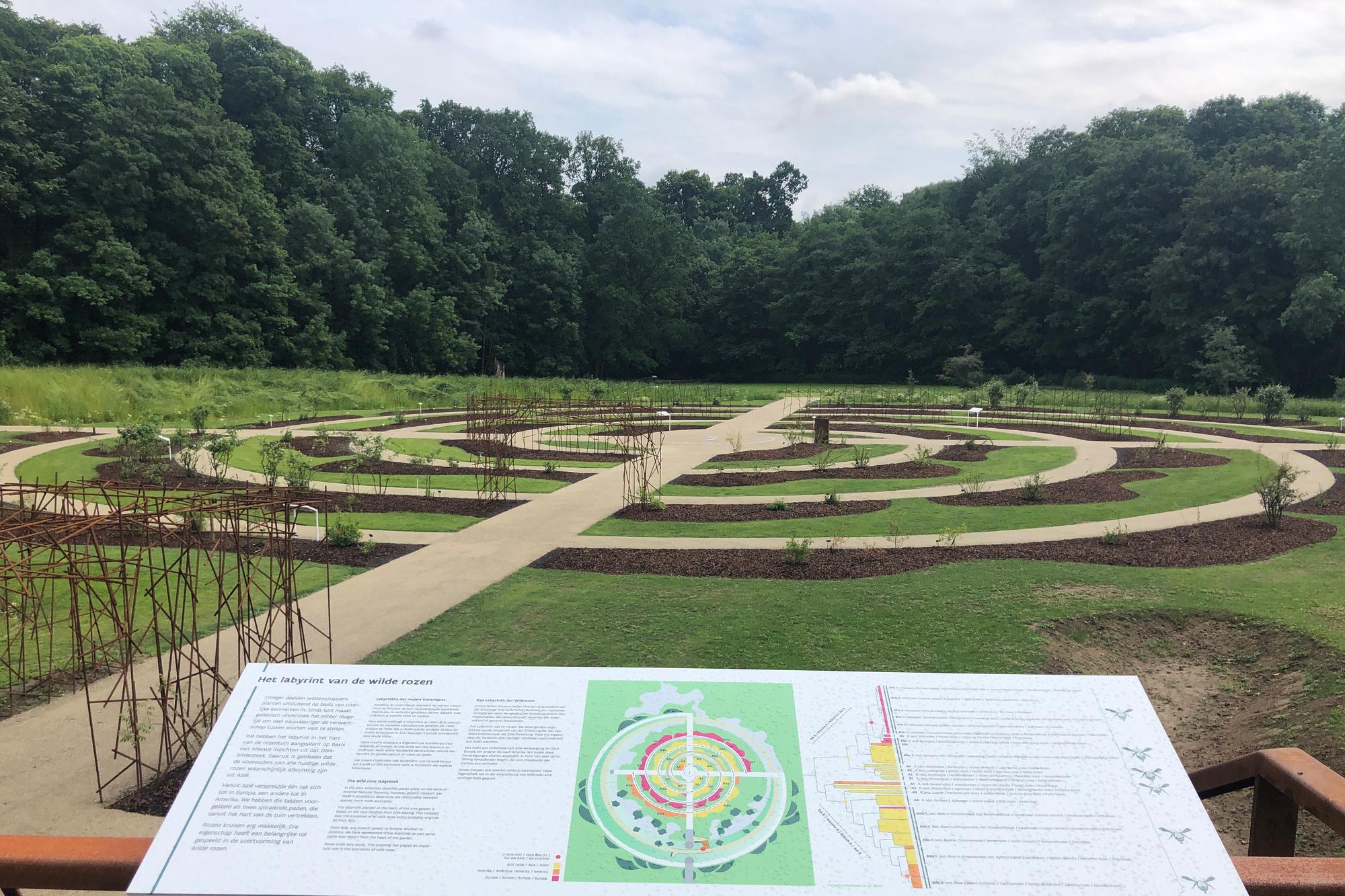 Het labyrint waar de rozen in zullen groeien., Belga