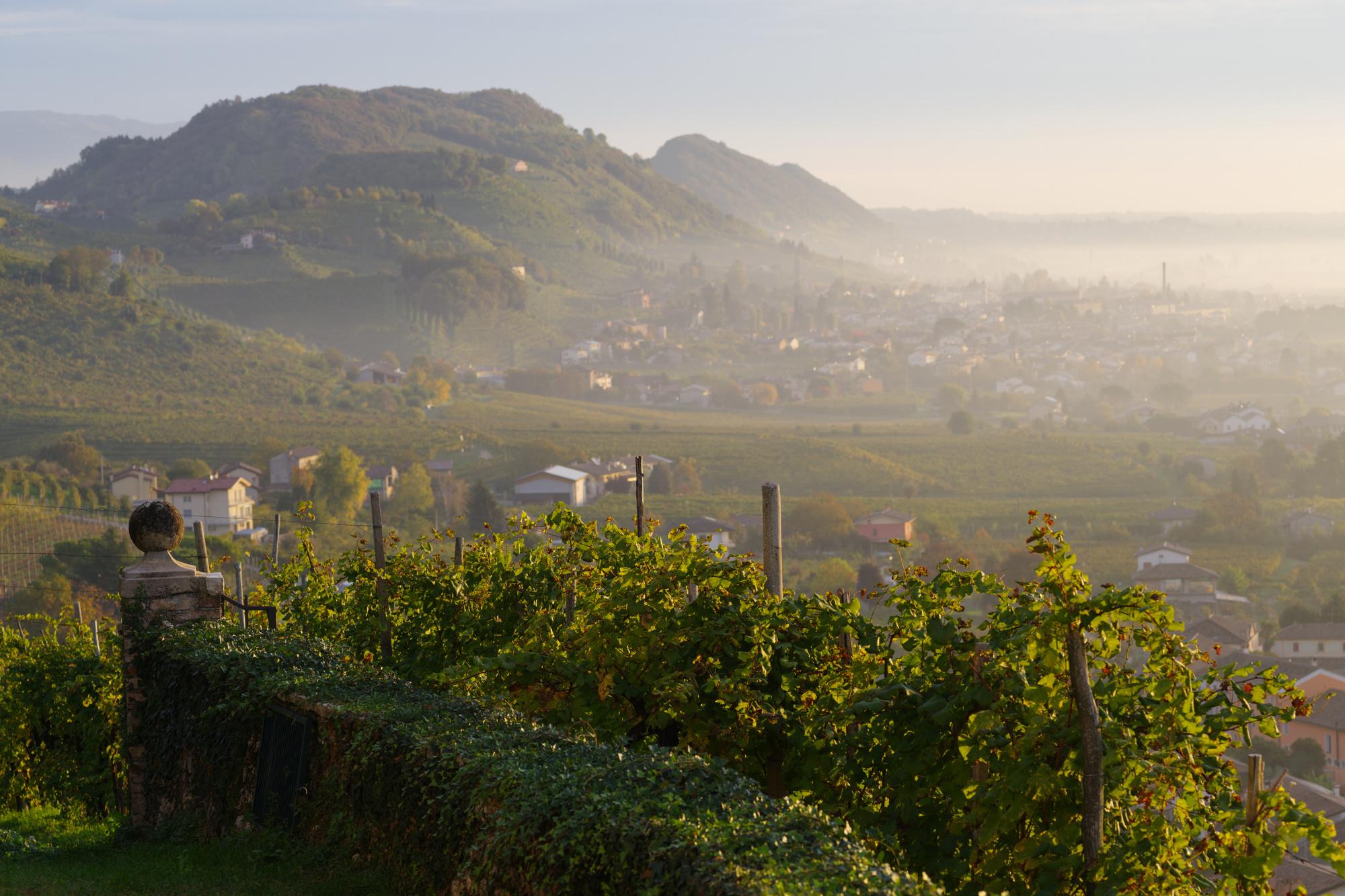 Prosecco-heuvels in het noordoosten van Italië, Getty