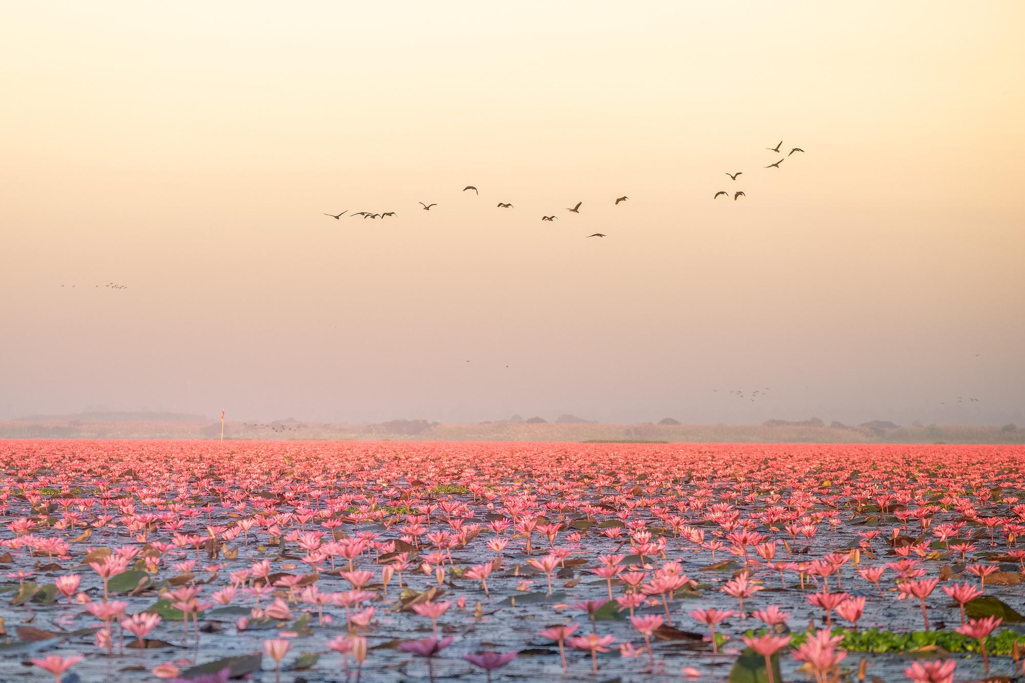 La Red Lotus Sea, Getty Images