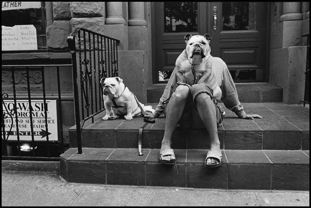 """USA. New York City. 2000."""" Je suis obsédé par les chiens - parce qu'ils me rappellent les gens mais sans les cheveux. """", ©Elliott Erwitt / Magnum Photos"""