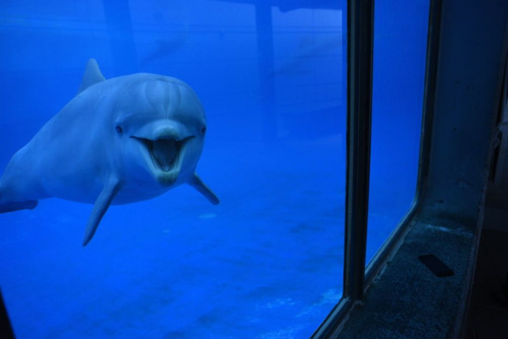 Dolfijnen, Getty Images