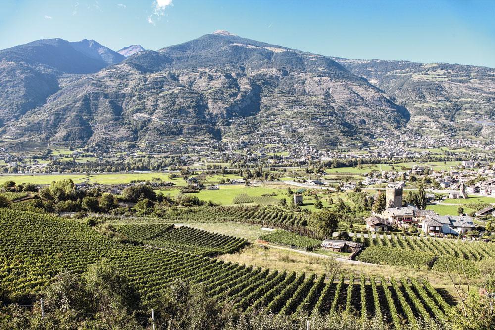 Dans les vignes du Val d'Aoste, ENRICO ROMANZI