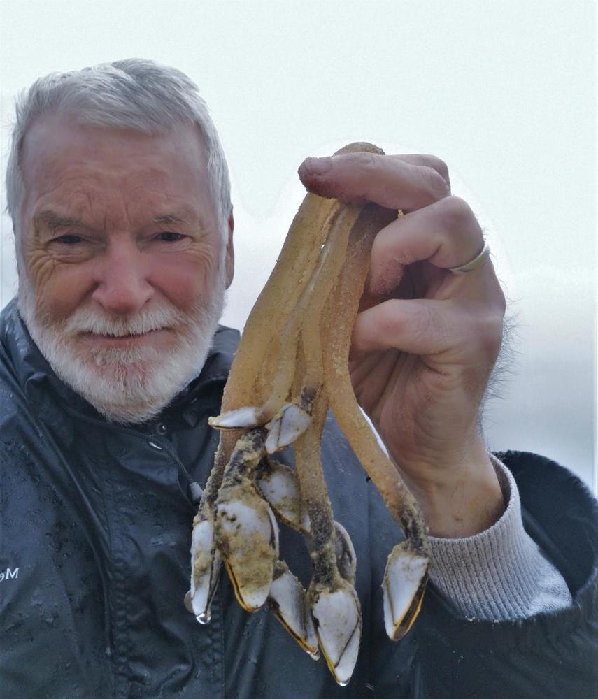 """Eric Vandewalle toont de vreemde zeeschepsels. """"Ik heb zoiets nog nooit gezien"""", klinkt het., (Foto JRO)"""