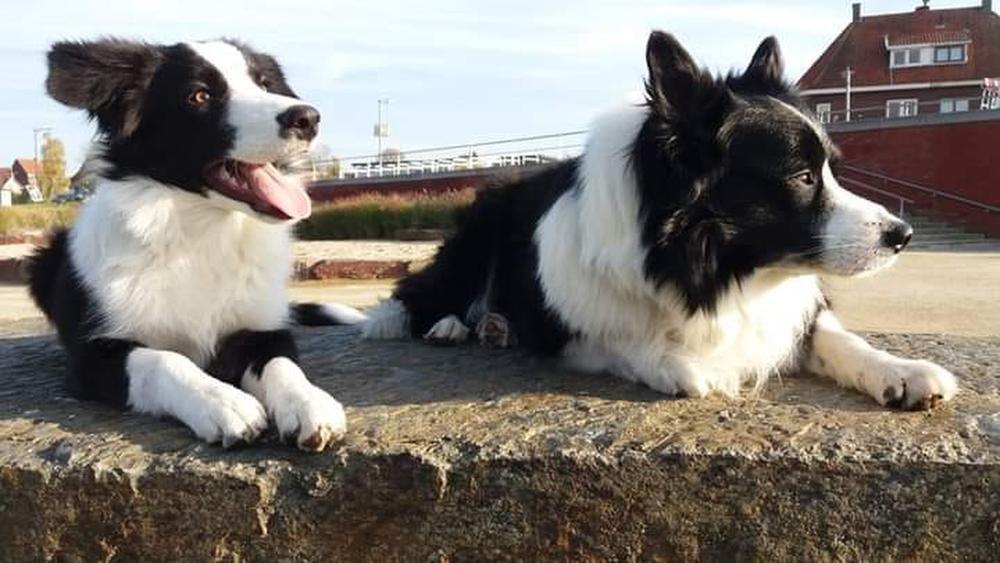 Piraat en Lucky waren al meer dan een jaar onafscheidelijk., (Foto AN)