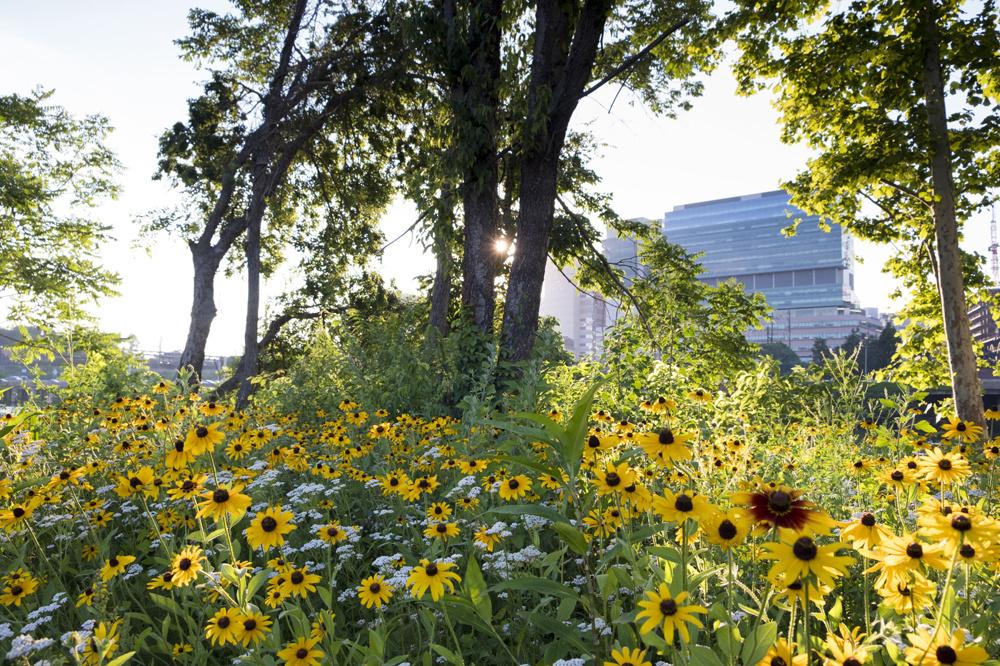 Sentier récréatif de Schuylkill Banks dans une zone industrielle revitalisée avec l'Université en arrière plan, Philadelphie, Pennsylvanie, Getty Images