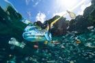 Les pays du G20 trouvent un accord sur la pollution plastique des milieux marins
