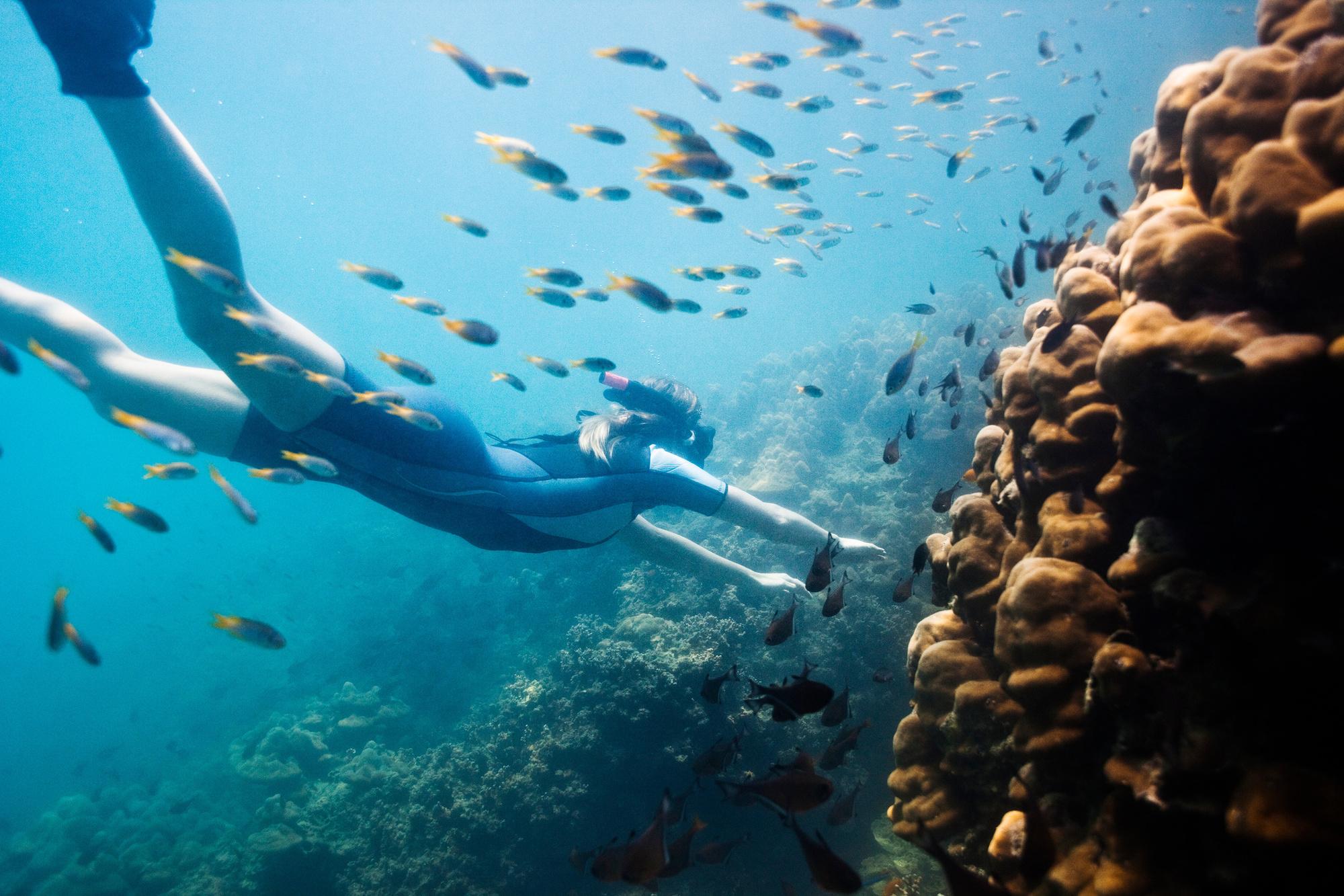 Plongée sous-marine à Koh Tao, Getty