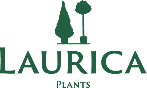 Laurica-Plants